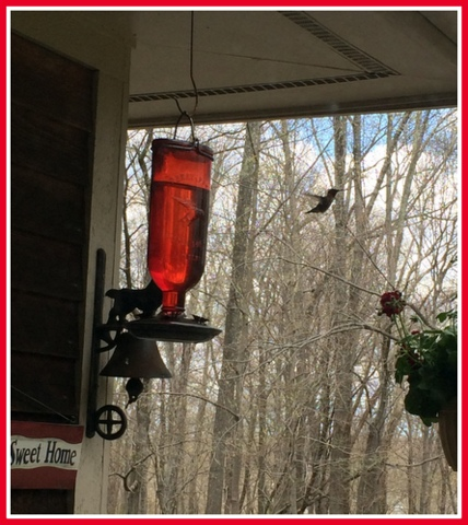 The hummers came early this year.