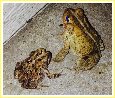 Even toads love their babies!
