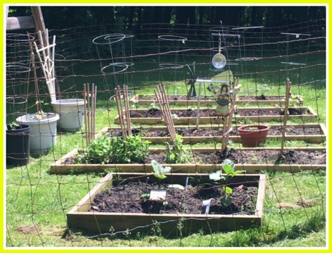 Yum! Eggplant, lettuce, kale, cukes, tomatoes, beans, potatoes, carrots...I can't wait. Off to a good start.