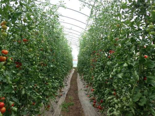 This is what feminism can do: Grow amazing tomatoes
