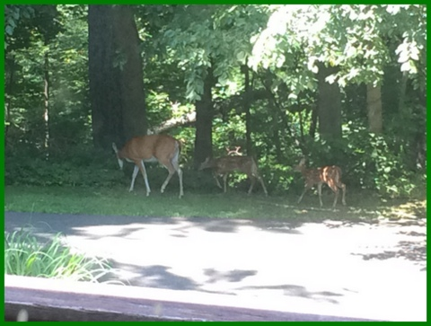 The baby deer we cooed about in summer...