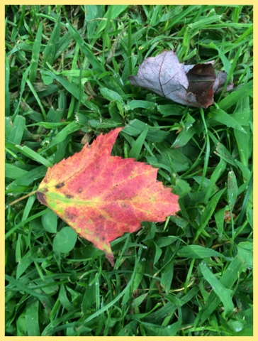 The first leaf of fall...