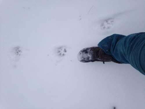 Breaking trail in freshly fallen snow.