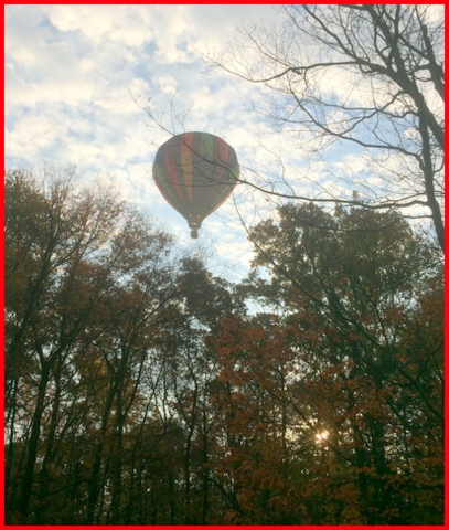 One fall morning, the rooster called his distress call, and this beauty was floating above my yard so low we could say hello!