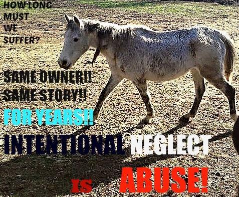 helphorses