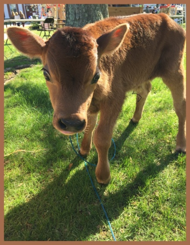 I love cows. This four day old was at our town's Earth Day. They give us milk and cream (to make ice cream)!  And they sure are darn cute...