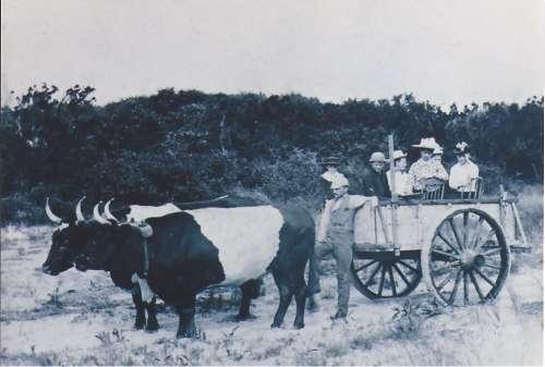 Image (36) VINTAGE Gurnet Ox Cart EDIT