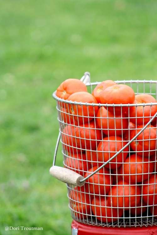 Tomato Cover 2-001