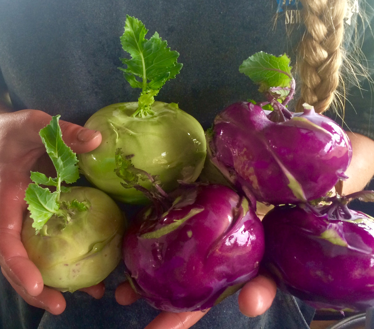 Vibrant kohlrabi! Delicious raw or cooked!