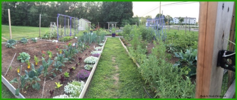 A panoramic view of the Bethel Extension Master Gardener Display Garden, where I have enjoyed volunteering and learning from Master Gardeners. Harvests go to food banks and shelters.