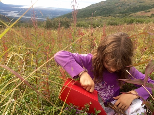 Jess tests out the berry picker, but ultimately chooses to hand pick.