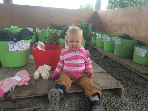 Ava, my willing and...happy?...helper at the Sunday farm stand.  She was all smiles until I asked her to smile for a photo.  She's also a tomato thief! Little stinker!