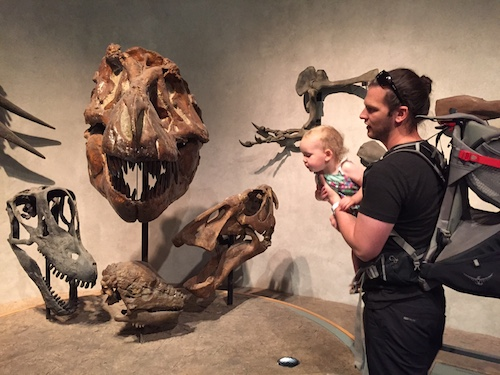 Checking out dinosaurs at the Colorado Museum of Nature and Science.  What big teeth they have!