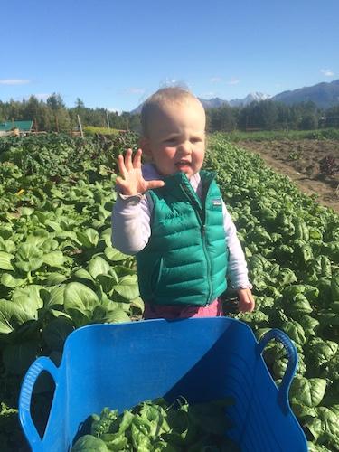Mama's little spinach picking helper.