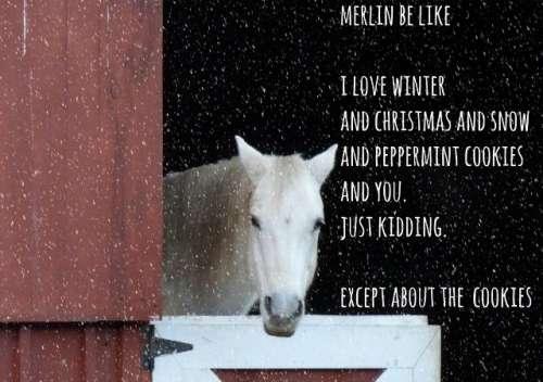 MerryMerryMerlin (640x451)