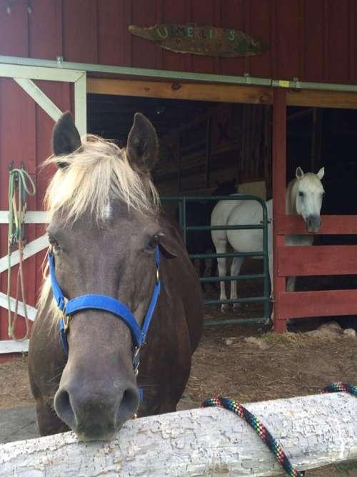 horsesinbarn