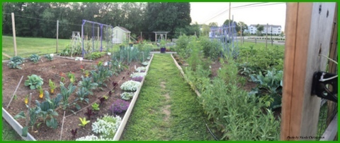 A panoramic of the garden early in the season.