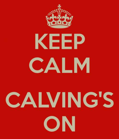 keep-calm-calving-s-on