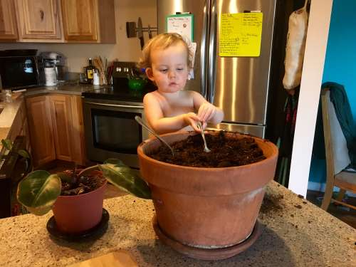 Potting up rootbound Houseplants is a special thing to do!