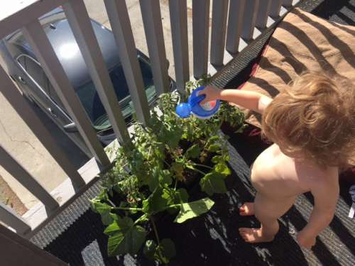 Hot time, summer in the city!  Oh, to be a constantly naked toddler...My tomatoes need to be potted up!