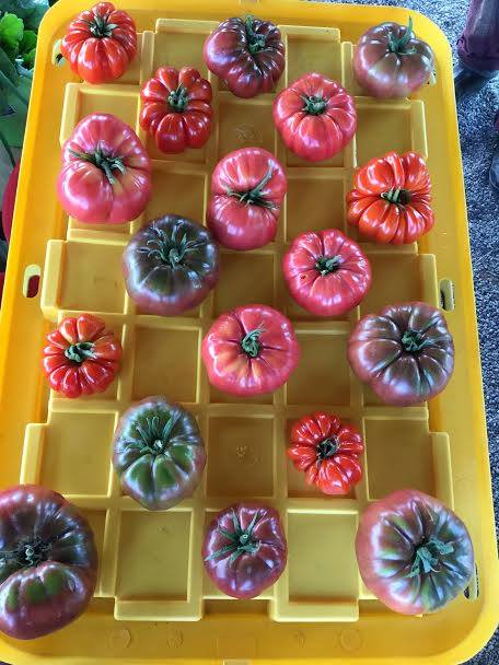 These heirloom tomatoes are too beautiful to end up in a landfill!