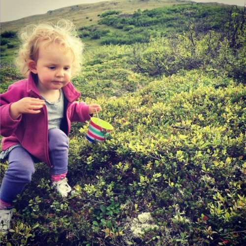 Ava ate more blueberries than she picked, and I can't blame her!