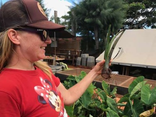 Tropical Farmgirl Alli in her element--showing us a taro top.  This will help grow more taro--it will soak in water to encourage the root to grow and then will be planted.  A new root (the edible part of the plant) will regrow.  Pretty neat!