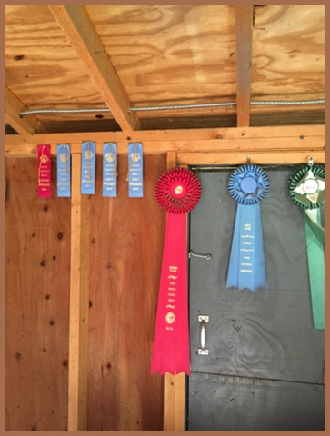 Some of the alpaca's winning ribbons
