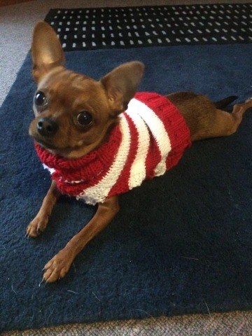 From chihuahua sweaters...