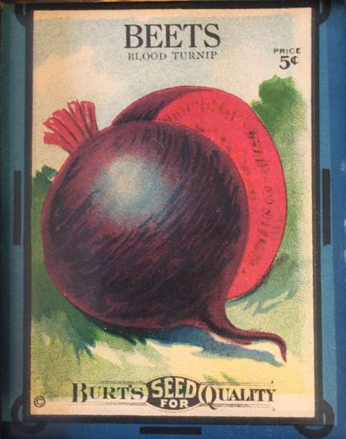 Don't you love the art on this early 1900's seed packet?