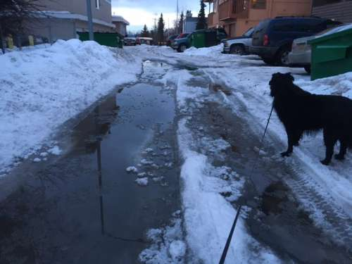 This puddle was a good ten inches deep at its deepest point.  It is gone now but stuck around for about a week before enough snow melted to drain it out.
