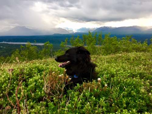 Resting in a blueberry patch.