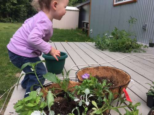 Opal helps pot up some hanging baskets, container peppers and container tomatoes.  She loves to copy whatever I do!