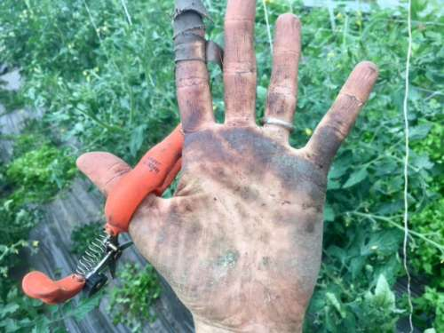 Post-tomato work hands.  Ripe for the manicuring.