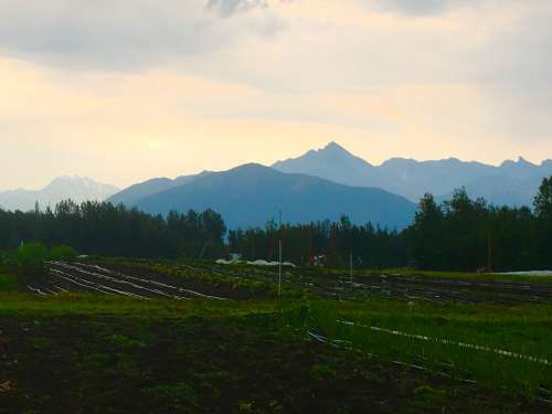 View from the tomato house--post lightning storm  (rare in Alaska).