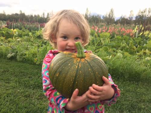 Ava sized pumpkin!
