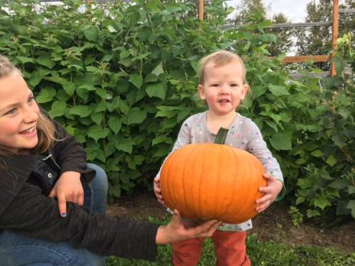 We harvested pumpkins and winter squash a few weeks ago.  We've had a couple of frosts in September.