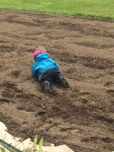 Gotta help those cover crop seeds germinate, huh Opal?