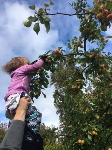 Picking apples with some help from daddy.
