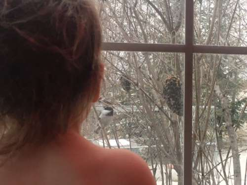 Chickadee, chickadee, fly to my window...