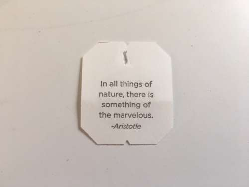 A good reminder from my Cold Care tea bag.