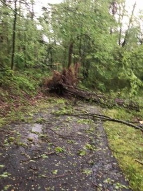 This was one of the trees blocking the driveway. This one hit the house. The upturned root stood eight feet tall!