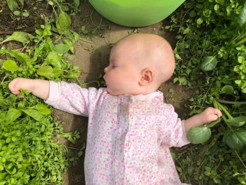 Baby Fern is already learning to pick chickweed. Thanks for the help, little baby!