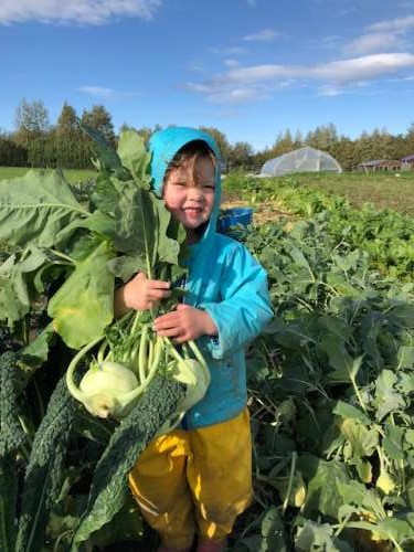 Opal helps carry kohlrabi to the harvest bin.