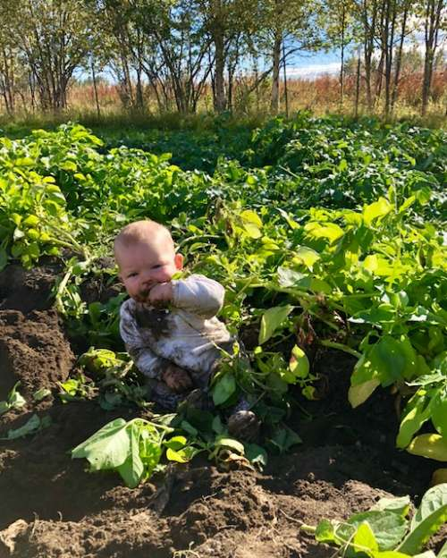 Fern helps harvest potatoes.  It's okay for babies to mouth nightshade leaves...right?