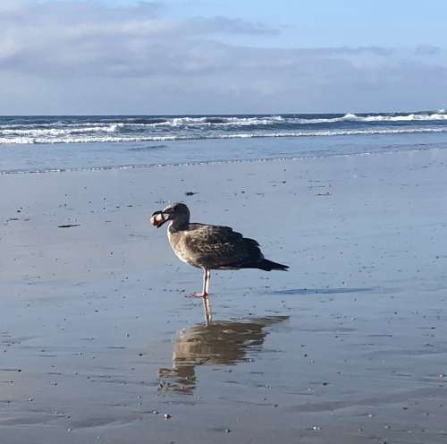 We drank champagne on the beach and lost our cork to this gull.