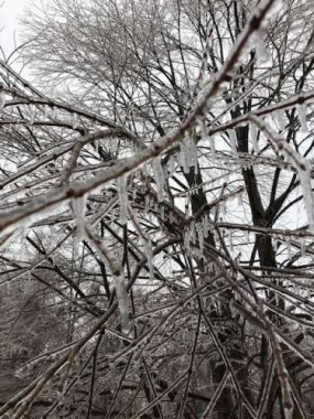 Branches can crack and fall from the weight of ice. When it gets as cold as it has been (below 0), salt doesn't work. We tread carefully and watch our step. Thankfully, extreme cold usually doesn't last too long.