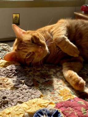 """Norman: """"As a superior cat species, I prefer a litter box to snow, and a warm sunny window. Yawwwnnn..."""""""