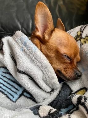 Back in, cozy and warm. Naptime...zzzzz