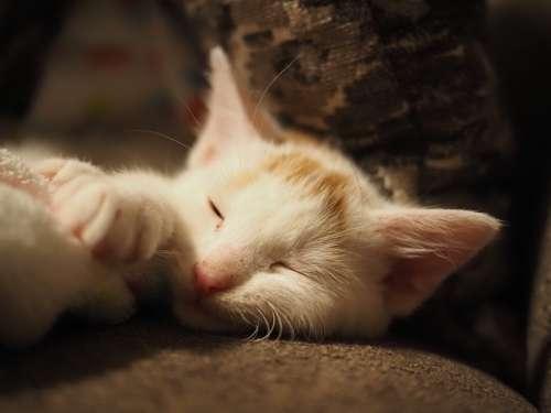 Some kittens for good measure